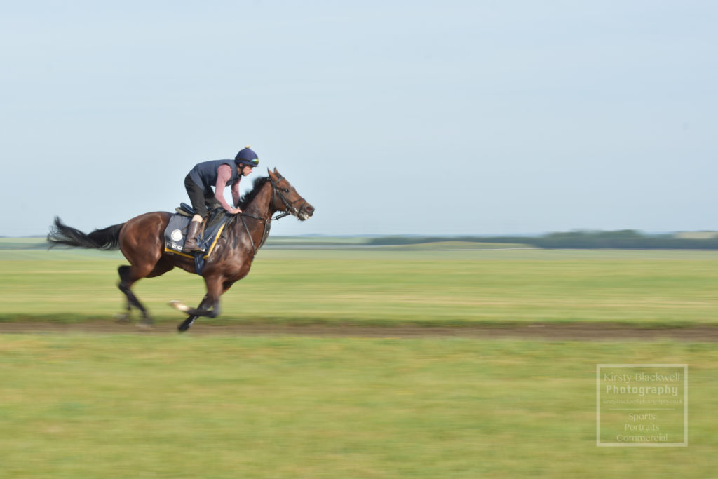 Newmarket Gallops (11 of 33)