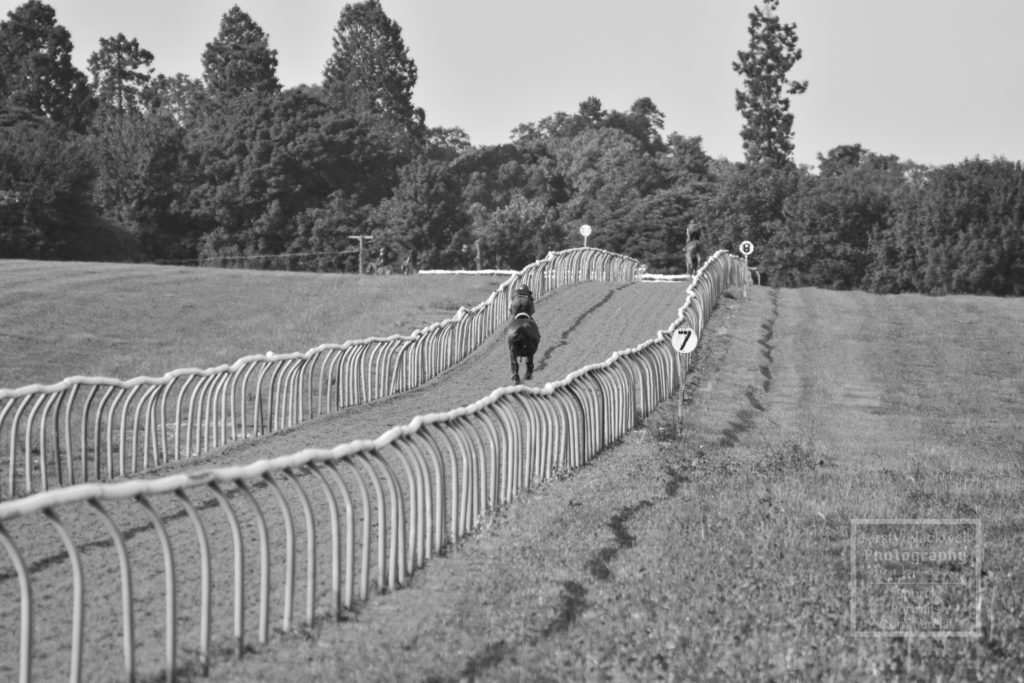 Newmarket Gallops (18 of 33)