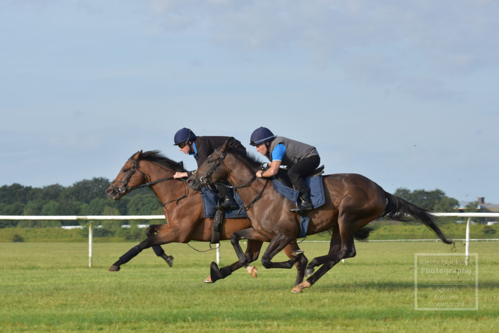 Newmarket Gallops (4 of 33)